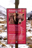 Attention Grizzlys